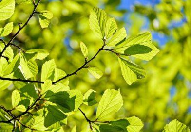 Wiosna, słońce i jakość powietrza…