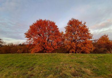 10.10 Dzień drzewa